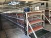 肉雞籠養設備,三層兩門肉雞籠