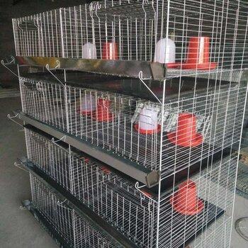 定制加粗加密小雞籠雛雞籠4層一體立式雛雞養殖籠