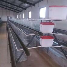 四層四門養160只雞的蛋雞籠加寬加深蛋雞籠石家莊設計生產圖片