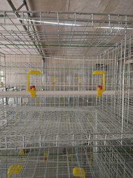 网养改成自动养殖镀锌肉鸡笼配件齐全上门安装