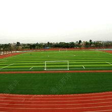 体育场人造草坪生产厂家图片