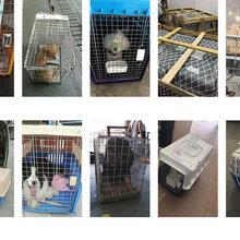 深圳宠物单独托运多少钱怎么办理图片
