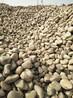 诚鑫厂家大量供应园林建筑铺路用鹅卵石优质天然水过滤鹅卵石纯白纯黑鹅卵石鹅卵石滤料
