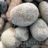 河北诚鑫供应庭院铺面园林鹅卵石杂色鹅卵石