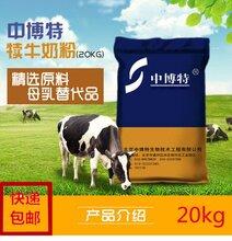 中博特防腹瀉犢牛奶粉小牛奶粉小牛代乳粉廠家直供圖片