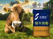 中博特犊牛奶粉精选原?#22799;?#20083;替代品