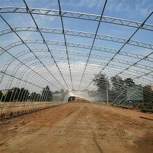 草莓棚樱桃棚采摘棚建设厂家抗风抗雪农业大棚生产