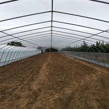 温室大棚骨架采摘棚草莓种植棚及大棚配件卡槽卡簧压顶簧生产直销