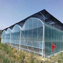 圓管大棚橢圓管熱鍍鋅大棚養殖棚蔬菜大棚建設