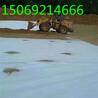 国标HDPE土工膜油田hdpe膜
