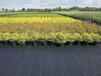 抑草布防草布農用果園除草布抗老化透氣透水黑色防草無紡布