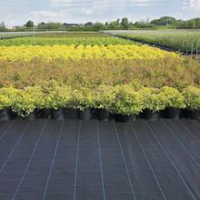 石家莊柑橘園專用防草布廠家直銷除草布質量可靠價格優惠圖片