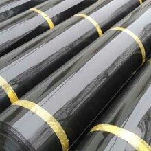 HDPE隧道防水板EVA糙面土工膜PVC吊帶防水板圖片