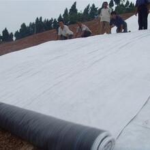 膨潤土防水毯人工湖防滲防水毯密實性高國標復合防水毯圖片