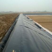 廠家生產EVA防水板種植屋面隧道用帶自粘復合防水板圖片