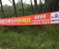 长宁3米高刚竹继红花木基地