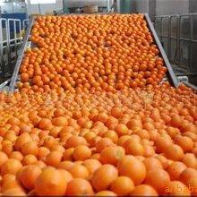 贛南臍橙批發價格