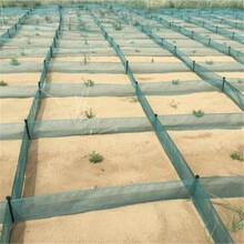 阿里沙丘變綠洲阻沙網獅泉河鎮防沙治沙阻沙網固沙網阻沙沙障圖片