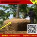 树根网筐A苗圃人员移动的网筐篮子A安平县恩尔树根网制品厂