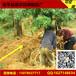 农用铁丝网,包树根网,树根移植铁丝网篮,打包土球网厂家/价格