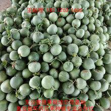 甜瓜種類大全__甜瓜示范基地大量批發甜瓜圖片
