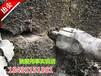 鎮沅地基改造煤礦開采劈裂器巖石劈裂機