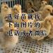 新疆阿拉尔四季鹅苗-贵州鸡苗孵化器