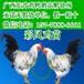 云南普洱铁脚麻鸡苗孵化场-无锡卖小鸡