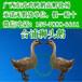 新疆阿拉尔鸵鸟苗-哪里有纯土鸡苗卖