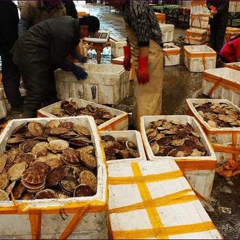 拉萨当雄海鲜市场价格查询