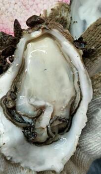 郑州二七区海鲜干货加盟