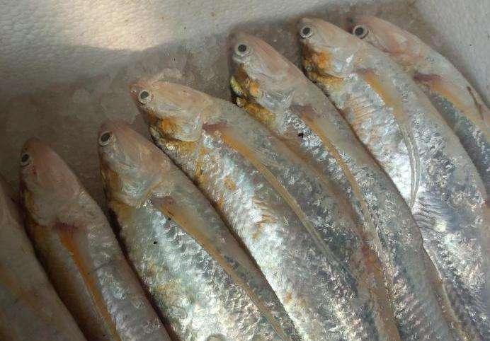 日喀则吉隆海鲜市场价格查询