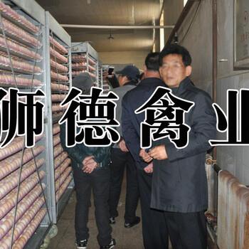 河南平顶山肉骡鸭苗孵化厂-岑溪鸭苗批发价格