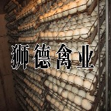 贵州省皖杂鹅苗批发遵义卖衣服的地方图片