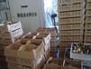 养殖)土鸡鸡苗价位-贵州鸭苗+孵化厂地址