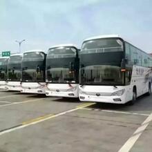 南浔到安阳豪华大巴车欢迎致电图片