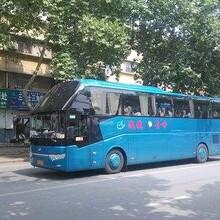 客车)晋江到界首长途大巴车在哪乘图片