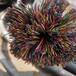 通州廢電纜銅回收回收舊電纜通州廢電纜銅回收
