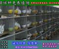 四川农村致富项目兔子养殖技术