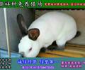 河南许昌养殖野兔子厂家哪家好