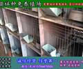 四川如何养殖兔子出售兔笼