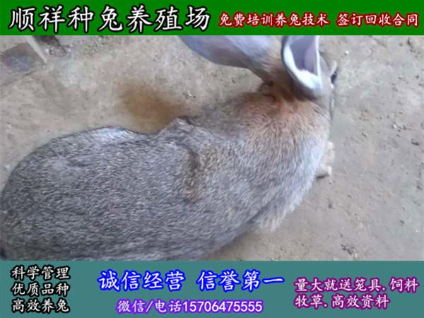 青海海西野兔子价格多少钱