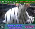 邯郸杂交野兔种兔子养殖场
