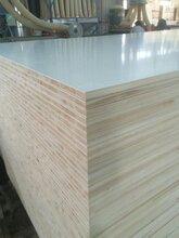 出售批發細木工板材密度板模板生態板免漆板膠合板圖片