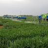 小麦打药机打药机生产厂家合肥多加