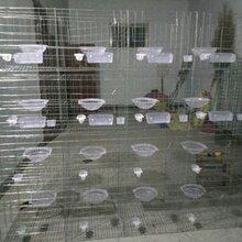 哪里有卖鸽子笼多少钱不锈钢鸽笼鸽子笼批发价钱鸽笼厂家图片