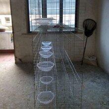 新型广式鸽笼优质加粗特粗鸽笼三层/四层12位/16位肉鸽养殖笼鸽子笼。图片