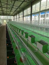 重慶兔籠哪里有賣的兔籠多少錢廠家直銷3層子母兔籠4層24位商品兔籠圖片