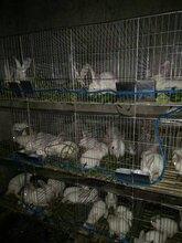 不锈钢兔笼厂家供应4层24位商品兔笼防锈兔笼育肥兔笼图片