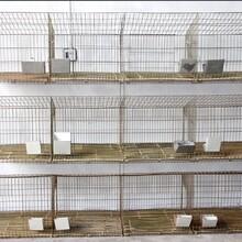 加粗鍍鋅兔籠家養飼養養殖兔籠塑料板地子母籠。圖片